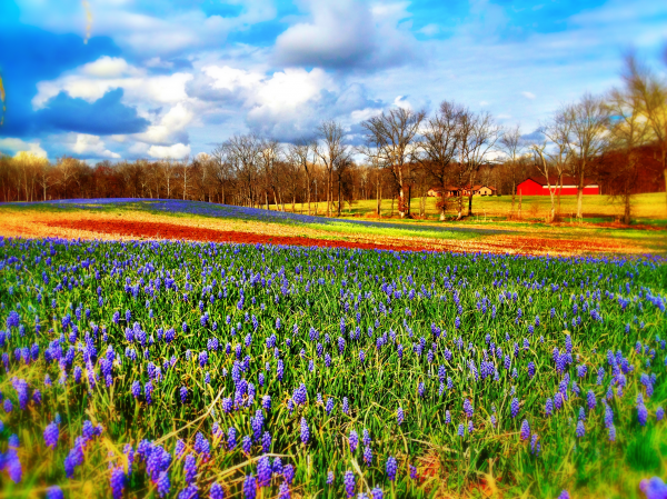 Spring In Carroll County Westminster Lawn Landscape
