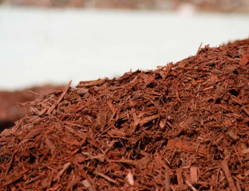 5 Surprising Facts About Mulch