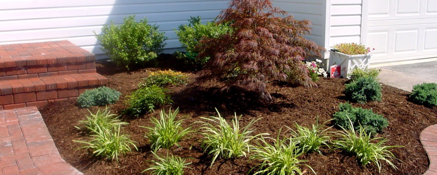 mulch for shrubs